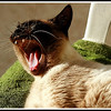 Just a yawn!