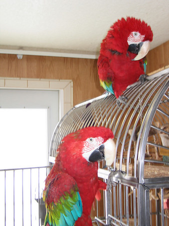 Birds 3/2006
