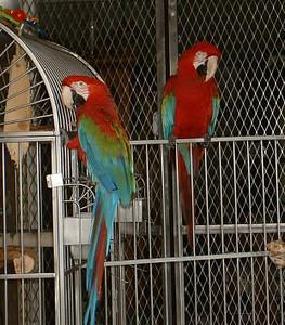Birds 9/2003