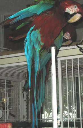 Birds San Diego Jan. 2008