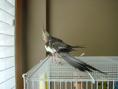 Birds get a bath
