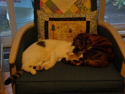 2005 Cats