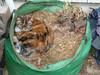 cat in a yard bag04