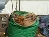 cat in a yard bag01