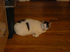 cat on the floor01