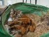 cat in a yard bag02