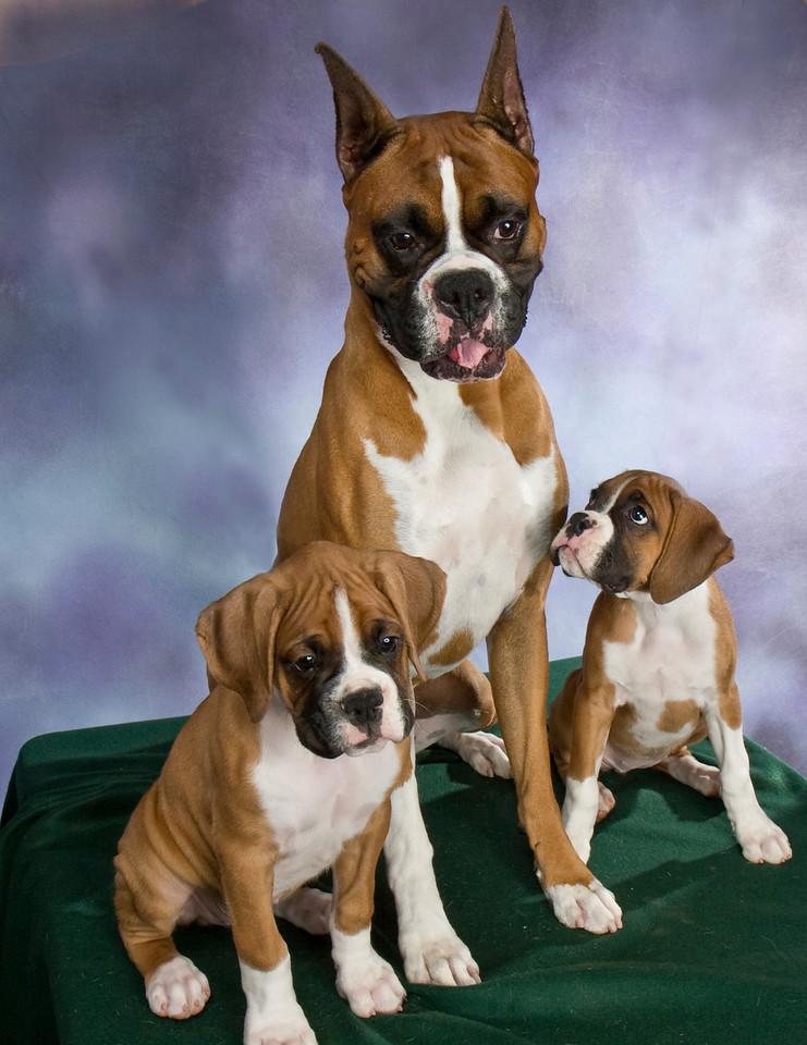 IMAGE: https://photos.smugmug.com/Pets/Boxers/i-8v8jHgB/0/b4e2df51/X2/Boxer%20001-X2.jpg