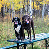 Uma and Bozzy on the picnic table at the intersection of Rabbit Run Trail and Cabin trail at Sol Vista Ski Area in the fall of 2008.