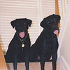 Josie (3) and Bear (1)<br /> June 2, 1999