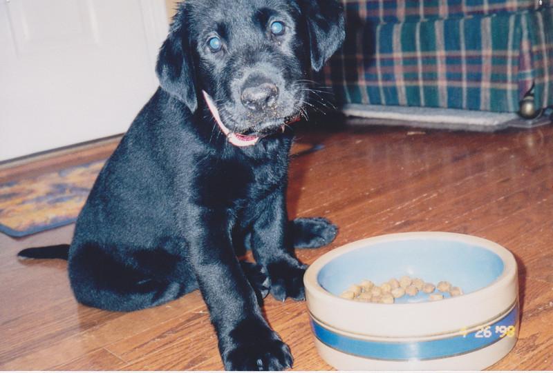 Bear, 1998