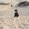 Josie at Seaside in the summer of 1996.