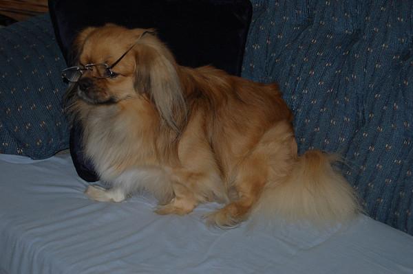 Bullet Nancy's Dog 2012