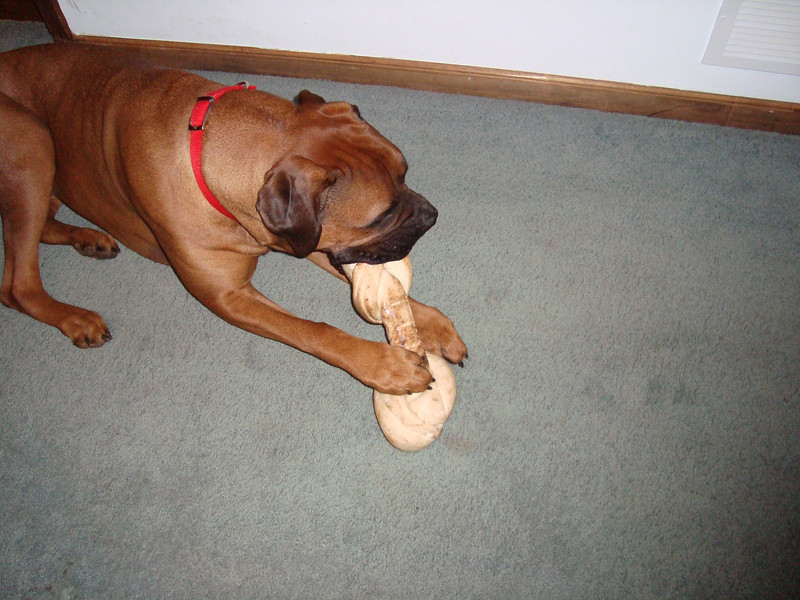 Chew toys do not last long!