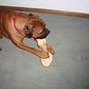 Chew toys do not last long!
