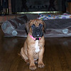 Olivia at 8 weeks