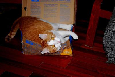 9-28-13 Buzzy in a box, Brighton CO 009