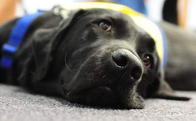 CCI dogs/puppies at Richmond SPCA
