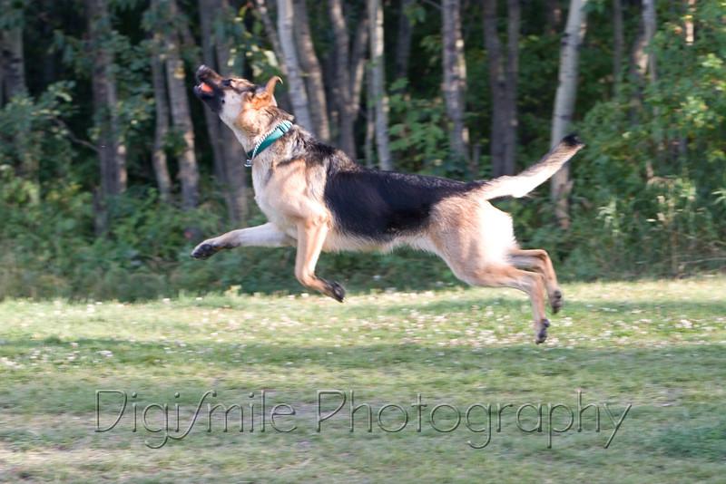 Photos at Callingwood Dog Offleash