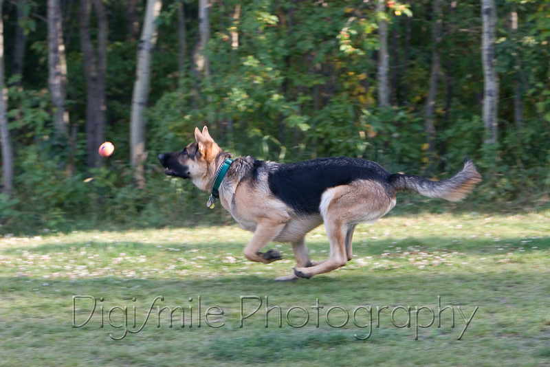 Photos at Callingwood Dog Offleash