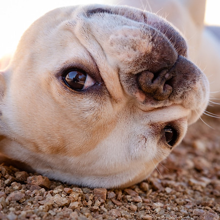 Lone Star Dog Rescue-3