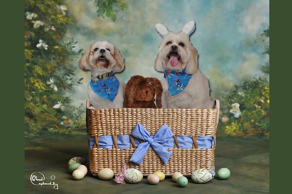 Tucker & Rupert basket 4x6