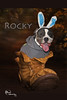 Rocky in boot with name 4x6