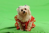 Canine Affinity 038Valentines 2013 c