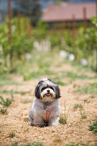 canine+wines_34