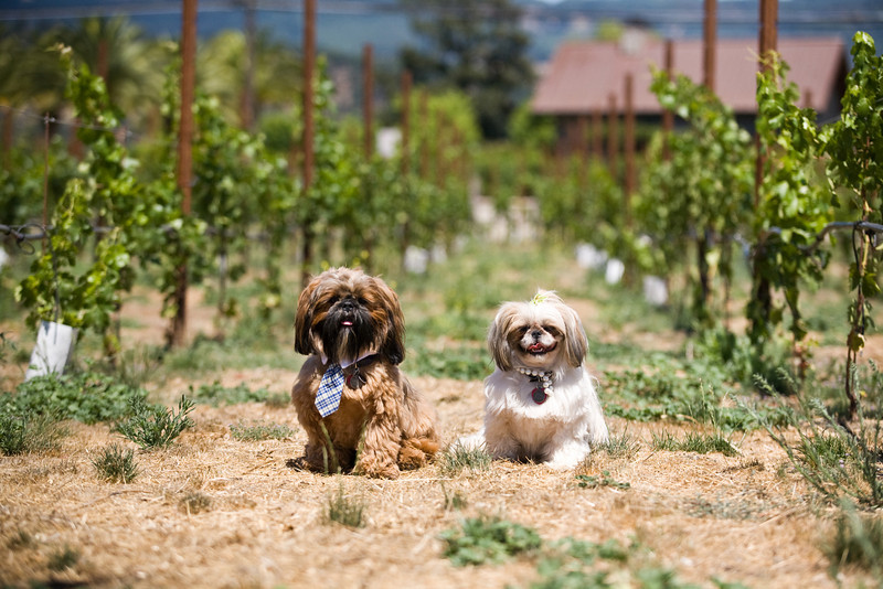 canine+wines_36