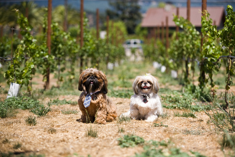 canine+wines_35