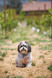 canine+wines_33