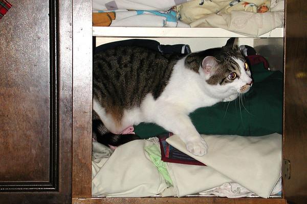 Capo in the Cupboard