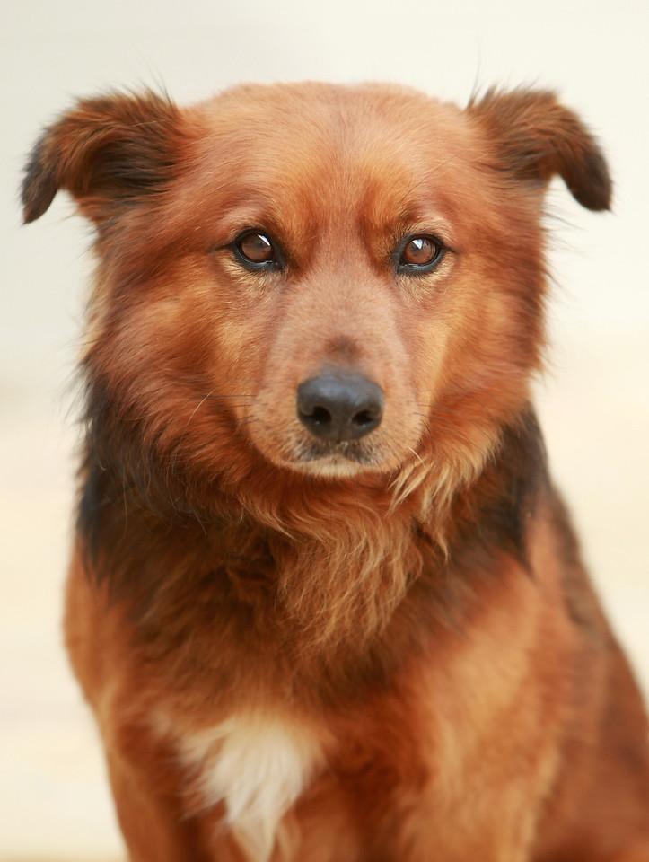 Carroll County Animal Shelter  3-24-10