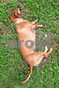 IMG_1123 Cashew resting 1