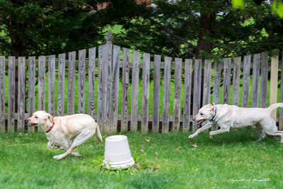 Casper's turn to chase.