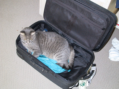 Casper hated it when I would leave for business trips.