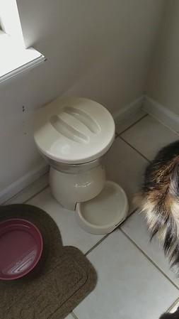 Cat Feeding Instructions