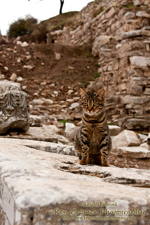 Stray in Ephesus, Turkey