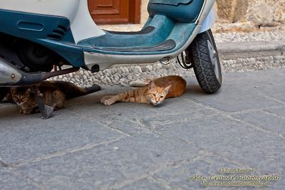 Strays in Rhodes, Greece.