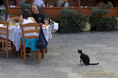 Stray in Rhodes, Greece