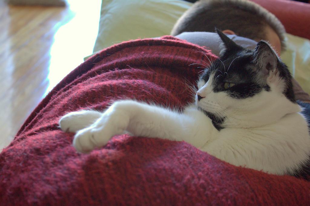 Sue, keeping the napping human company.