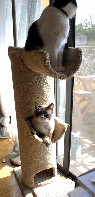Grommy, climbing through the cat condo. We didn't think he could fit in there anymore.