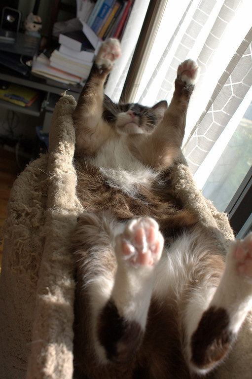 Gromit, paws and belly.