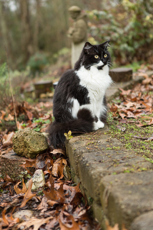 Black and white cat on garden path.