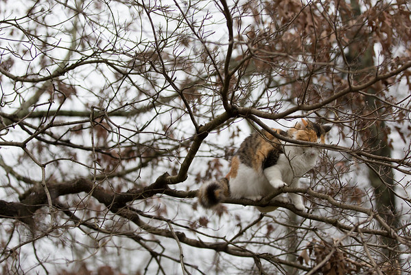 Calico cat in a tree