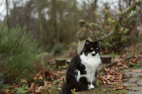 Black and white cat on a garden path.