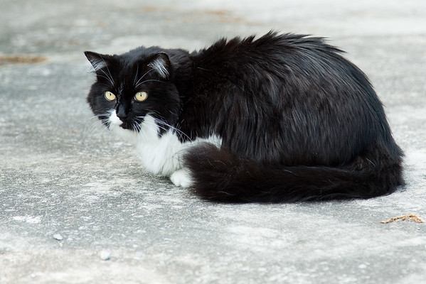 Black and White Cat on the driveway