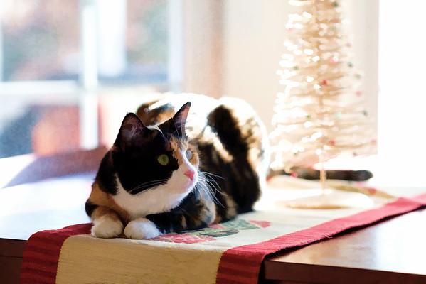 Calico cat using Topaz Labs preset