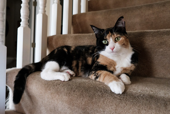 Luxie on the stairs taken with a fuji x-t2