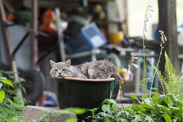 Cat in garden pot